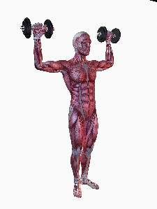 man-muscle-anatomy-shoulder-press